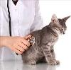 Ветеринарные клиники в Кудымкаре